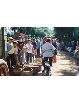 Café pure origine Costa Rica 100% arabica la brûlerie le Puy en Velay