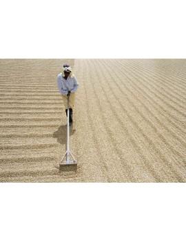 Café pure origine NICARAGUA 100% arabica la brûlerie le Puy en Velay