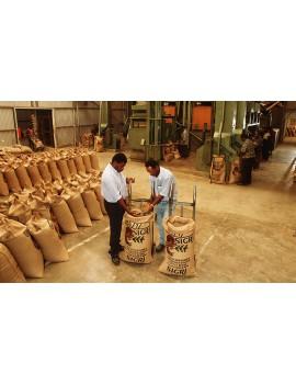 Café pure origine NOUVELLE GUINEE PAPOUASIE caracoli 100% arabica la brûlerie le Puy en Velay