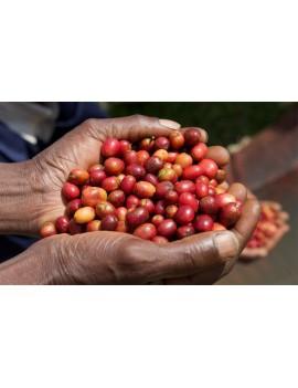 Café pure origine TERROIRS VOLCANIQUES 100% arabica la brûlerie le Puy en Velay